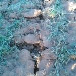 Ripper tracks